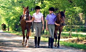 Horse Healing Adventures: One or Three Private Riding Lessons or a Trail Ride for One or Two from Horse Healing Adventures (Up to 67% Off)