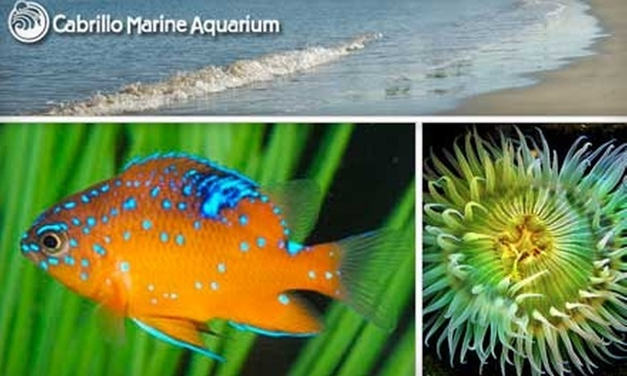 Cabrillo Marine Aquarium - Coastal San Pedro: $30 for One-Year Gift Family Membership to the Cabrillo Marine Aquarium