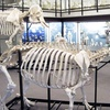Half Off Visit for 2 or 4 to Museum of Osteology