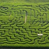 Half Off Corn-Maze Outing at Schwallier's Country Basket