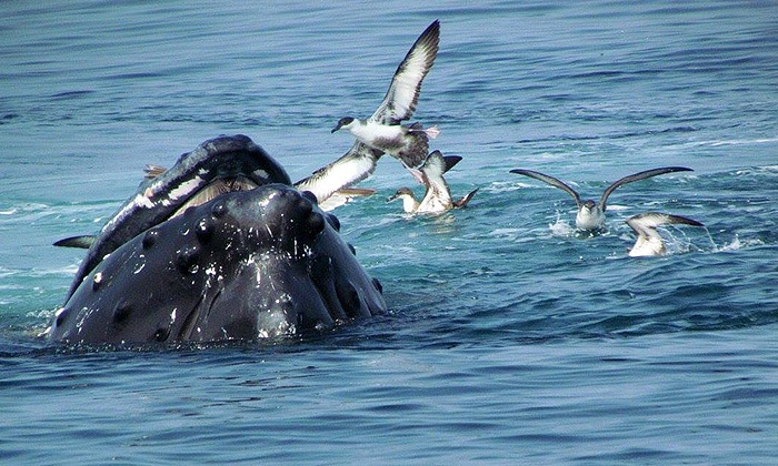 Capt. Bill & Sons Whale Watch - Gloucester: Whale-Watching Excursion for One or Two from Capt. Bill and Sons Whale Watch (Up to 44% Off)