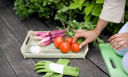 City Hydroponic: $100 Groupon - City Hydroponic in Brooklyn