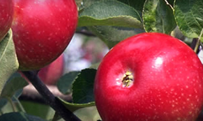 Hall's Apple Market - Multiple Locations: $7 for $14 Worth of Apples, Baked Goods, and Ciders at Hall's Apple Market