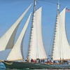 Up to 61% Off Whale-Watching Sailing Adventure