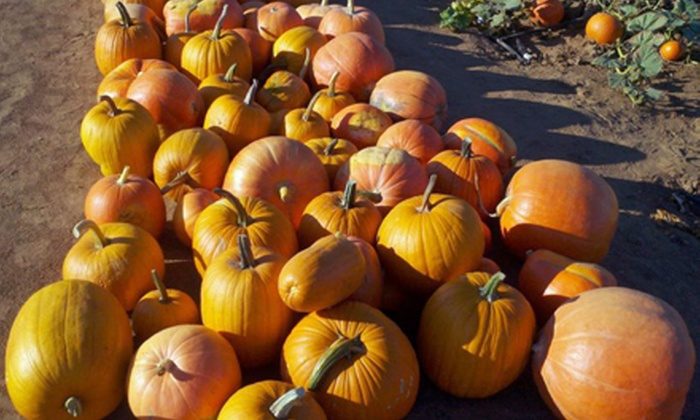 Corona Pumpkin Farm - Lake Mathews Area: Corn Maze and Pumpkin Patch Packages for Two or Three at Corona Pumpkin Farm (Half Off)