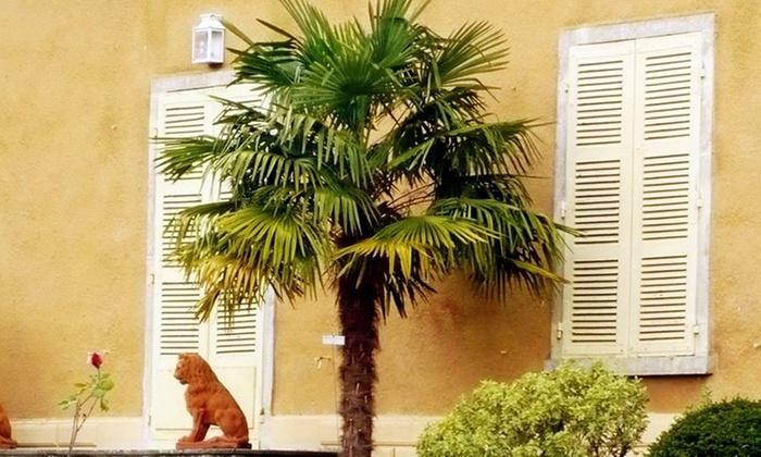 palmiers de chine 70 90cm groupon shopping. Black Bedroom Furniture Sets. Home Design Ideas