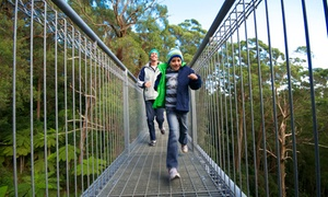 Illawarra Fly: $25 for an Adult Rainforest Treetop Adventure with Food and Drink at Illawarra Fly, Knights Hill (Up to $41 Value)