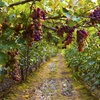 Up to 52% Off Vineyard Tours  at bioRide