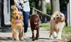 Up to 56% Off Dog Walking Services