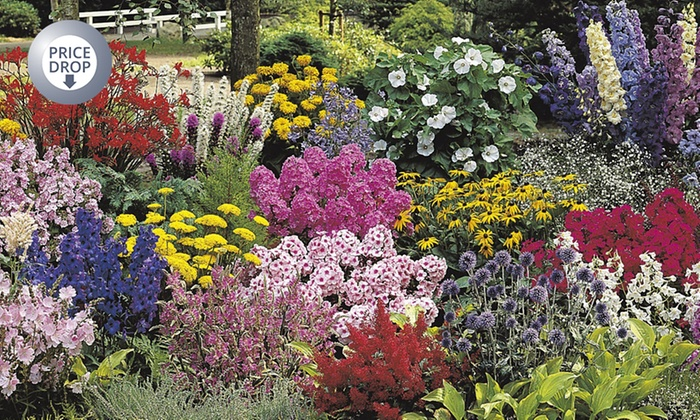 ten xl perennial border plants  groupon goods, Beautiful flower