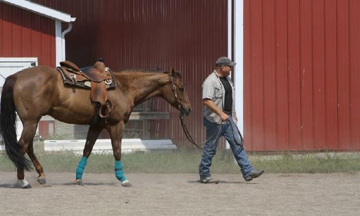 Jeff Geiger Performance Horses - Liberty:  Horseback Riding from Jeff Geiger Performance Horses