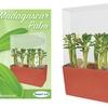 Madagascar Palm Growing Kit