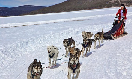 Shared Group or Private Group Dog-Sledding Tours for Two to Four from Alpine Adventures (Up to 51%Off)
