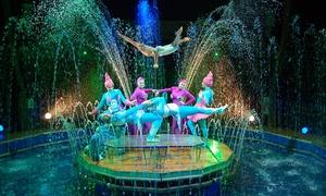 Magnifico Circo Acquatico: Magnifico Circo Acquatico dal 5 al 14 febbraio a Fiumicino (sconto fino a 50%)