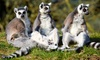 Promised Land Zoo - Ravenwood South: Admission to Branson's Promised Land Zoo for Two Adults or Two Adults and Two Children (Up to 53% Off)