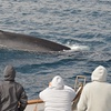 San Diego Whale Watch – Up to 52% Off Tour