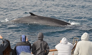 San Diego Whale Watch: Three-Hour Whale-Watching Tour for One, Two, or 10 from San Diego Whale Watch (Up to 61% Off)