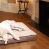 Faux-Sherpa and Suede Orthopedic Pet Beds