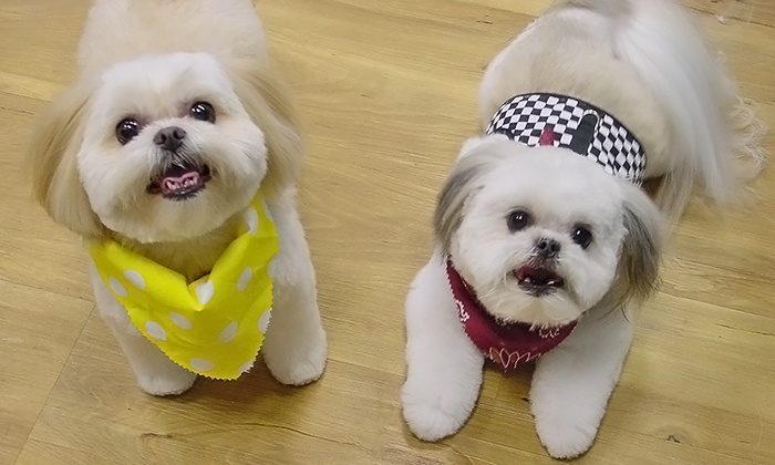 Dog Grooming - The Groom Room | Groupon