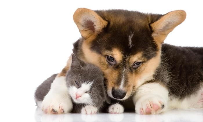 Dispawsal - Salem OR: $26 for $44 Groupon for Dog-Waste-Removal Services— Dispawsal