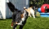 Up to 46% Off Pet Exams in Boulder