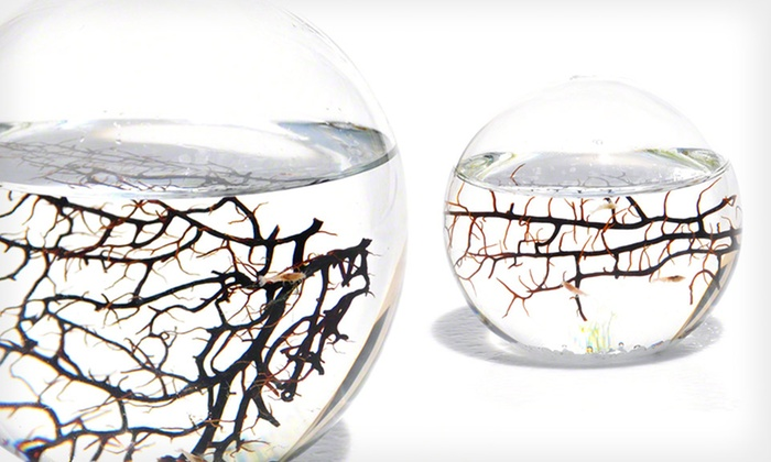 EcoSphere Closed Aquatic Ecosystems: Small- or Medium-Sized EcoSphere Closed Aquatic Ecosystem (Up to 49% Off). Free Shipping and Returns.