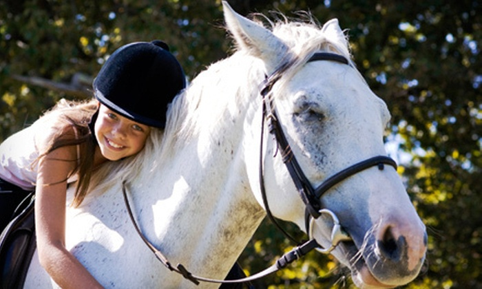 Silver Fox Stables Inc. - Silver Fox Stables Inc.: One or Two 60-Minute Horseback Riding Lessons at Silver Fox Stables Inc. in Medford (Up to 61% Off)