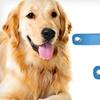$5.99 for Two PetZoom Self-Cleaning Brushes