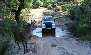 CASTELLAR: Ruta en 4x4 para dos, cuatro o seis personas por el Parque Natural de los Alcornocales desde 19,90 €