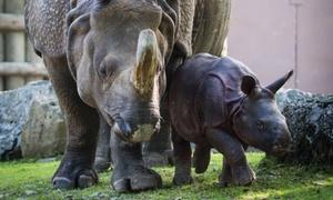 The Buffalo Zoo: $75 for a Family Plus Membership at Buffalo Zoo ($90 Value)
