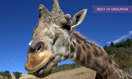 Behind the Scenes Giraffe Barn Encounter or Drive-Through Admission at Wildlife Safari (Up to 50% Off)