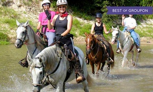 Cypress Trails Equestrian Center: Trail-Ride Experience for Two, Four, or Six at Cypress Trails Equestrian Center (Up to 50% Off)