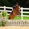 Up to 53% Off Private Horseback Riding Lessons