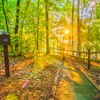 50% Off Camping at Laura S. Walker State Park