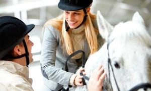 Centre Equestre du Scheidstein: 3 séances de poney ou de cheval pour 1 personne à 29,90 € au Centre Equestre du Scheidstein
