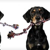 $10 for a Knotted Rope Tug for Dogs