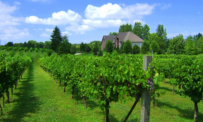 Valentino Vineyards & Winery - Long Grove: $19 for a Vineyard Tour, Tasting of Five Wines, and Seminar for One at Valentino Vineyards & Winery ( Value)