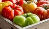 Beefsteak and Rutgers Heirloom Tomato Rocket Seed Kits: Beefsteak or Rutgers Heirloom Tomato Rocket Seed Kits