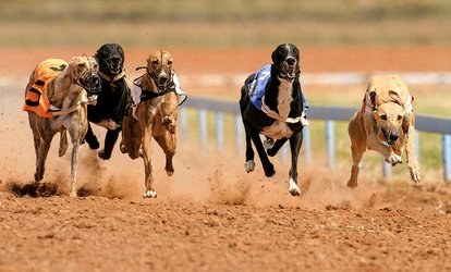 image for Greyhound Racing, Burger and Drinks for Up to Eight at GRA Belle Vue Greyhound Stadium (Up to 68% Off)