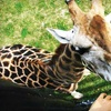 $11 for Safari Niagara Visit in Stevensville