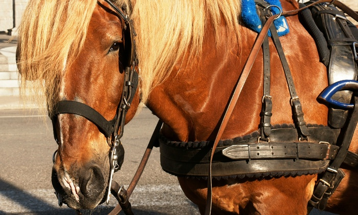 Ladybug Ranch LLC - Multiple Locations: Carriage Ride for Two or Four from Ladybug Ranch LLC (Up to 39% Off)
