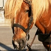 Up to 39% Off Carriage Ride for Two or Four