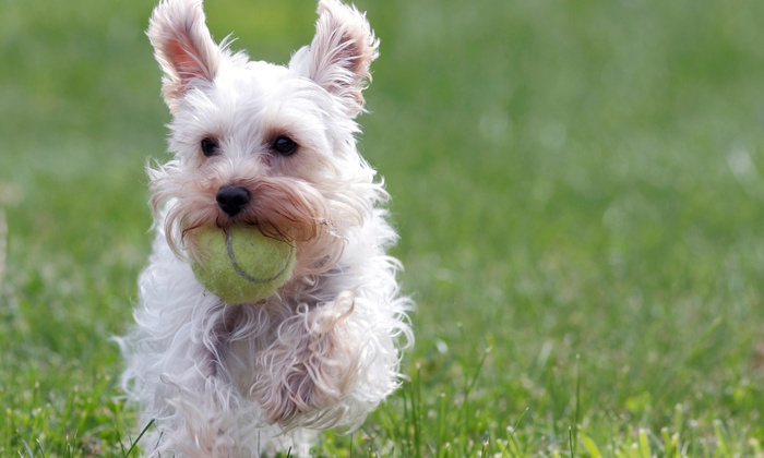 Wag Hotels - Multiple Locations: $49 for Five-Day Summer Camp for One Dog at Wag Hotels (Up to $235 Value)