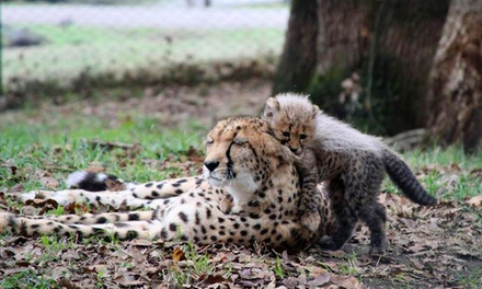 $125 for a Cheetah Deluxe Stroll Package for Two at Wildlife Safari ($250 Value)