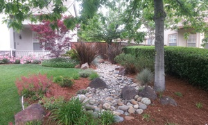 East Bay Landscapes: $110 for $200 Worth of Services — east bay landscapes