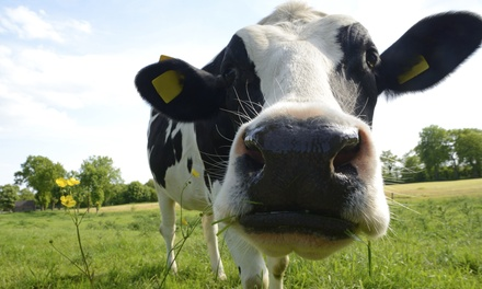 Dairy-Farm Tour for Four or Eight at Kreider Farms (Up to 50% Off)