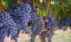 Dennis Vineyards Winery - Endy: $14 for a Vineyard Tour, Complimentary Wine Tasting, and a Take-Home Bottle for Two at Dennis Vineyards in Albemarle ($28.50 Value)