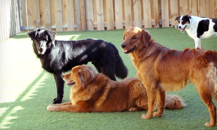 Camp Canine - Multiple Locations: One Day of Trial Doggy Daycare with Two or Three Nights of Boarding at Camp Canine (Up to 70% Off)