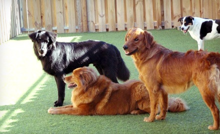 1 Day of Trial Doggy Daycare (a $15 value) and 2 Consecutive Nights of Boarding (a $100 value; a $115 total value) - Camp Canine in Hollywood