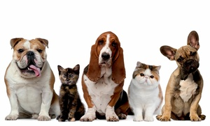 $10 For $20 Worth Of Pets And Pet Supplies At Pets Plus